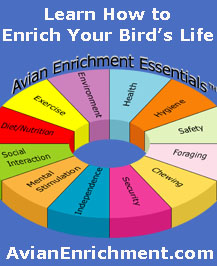 Avian Enrichment