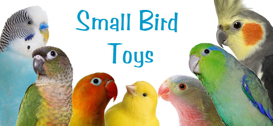 Small Toy Parrots : Size guide