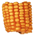 Drilled Ear Corn (9)