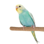 Sure-Grip Grooming Perch Sm