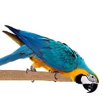 Sure-Grip Grooming Perch XL